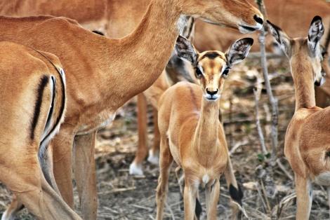"""ein bildhübsches """"Bambi"""""""