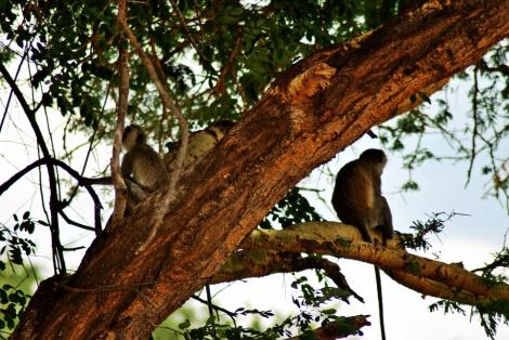 Äffchen im Baum