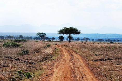 typisches Afrika Foto