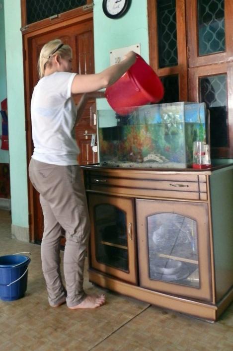 Aquarium-Reinigung auf Indisch