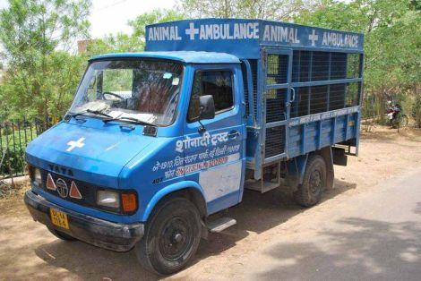 Tierrettungswagen