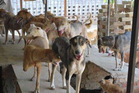Hunde im Außengehäge