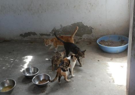 Katzen im Sonadi