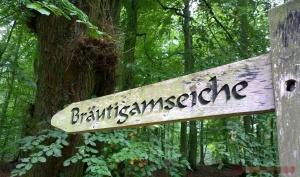 Ein Baum, der deine(n) Traumfrau/Traumann findet! Hört sich nach Märchen an? Kann aber durchaus Realität werden!... WEITERLESEN...